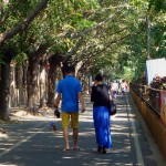 """The History of Street Trees: """"This will be easy!"""""""
