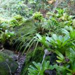 Kaua'i: Where a Plant Nerd Vacations