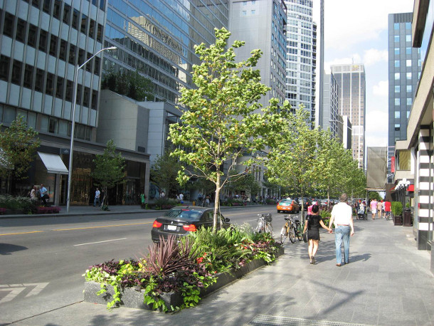 Trees planted in Silva Cells along Bloor Street in 2012