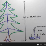 How Do Trees Transport Water To Such Great Heights?