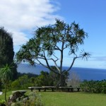 Impressive Tropical Trees from a Visit to Kaua'i