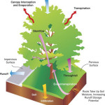 How Do You Calculate Stormwater Credits for Trees? Part 1: Why tree-based credits are hard to quantify