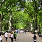 Using Trees and Soils in Urban Stormwater Management <em><i><br>James Urban Webinar</em></br></i>