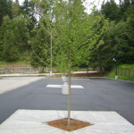 Washington State Department of Ecology: Silva Cell Functionally Equivalent to a Bioretention Facility