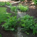Is it a Raingarden or is it Bioretention?