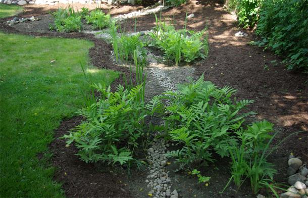 Rain Garden Plants For Shade Garden Ftempo