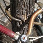 Tree Liberation