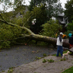 Q & A: Tree Stability in Urban Areas