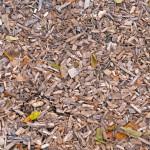 Against Mulch
