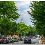 Trees and Soils: Stormwater Superstars in the Greater D.C. Region?