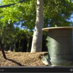 Video: How to Tie ArborTie