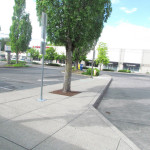 Tigard, OR Sets Soil Volume Minimum for Street Trees