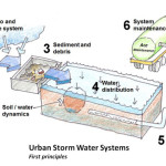 Illustrated Guide To Using Trees and Soils to Manage Stormwater