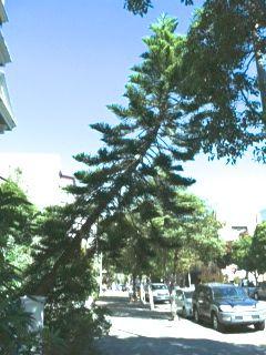 Photo 3 leaning tree