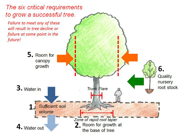 Six Critical Requirements to Grow a Successful Tree. Image: James Urban