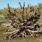 What Factors Determine Root Growth in Rock-Based Soils?