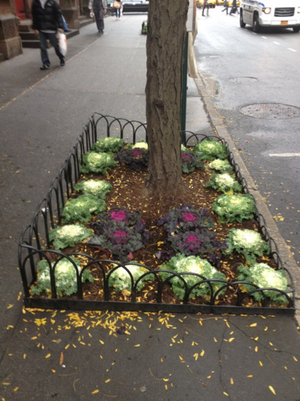 An example of a decorative tree guard on 23rd Street and Park Avenue in New York City.