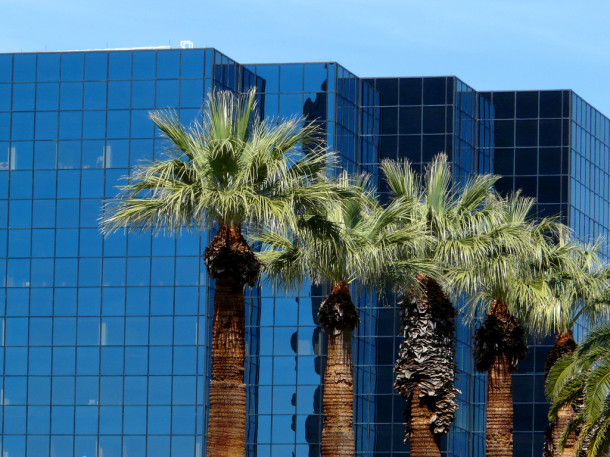 Urban palm trees in Phoenix, AZ. Flickr credit: sea turtle