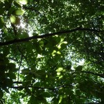 Does Exposure to Nature Aid Long-Term Thinking?