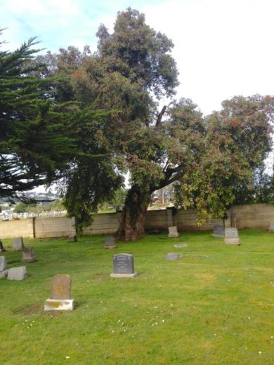 Cypress Lawn Memorial Park (historic section)