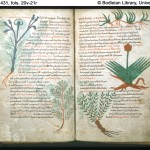 History of Street Trees in the British Isles: Medieval and Monastic Era to Aristocratic Pall Mall
