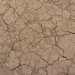 Webinar: Designing for Desert Soils