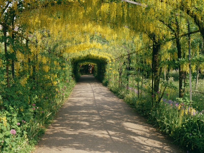 Vegetated archway as Cloister at Hampton Court (Image: Stacjia)