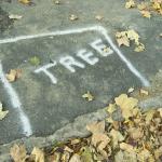 Philadelphia's Green Streets Design Manual Weak on Trees and Soils