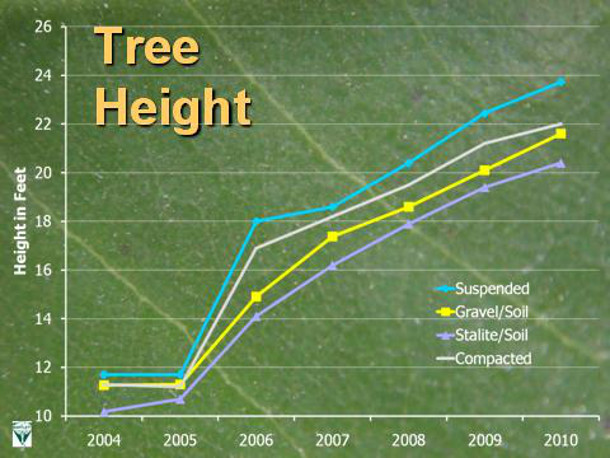 Trees growing in suspended pavement outperform those in other growing media in height. Credit: E. Tom Smiley