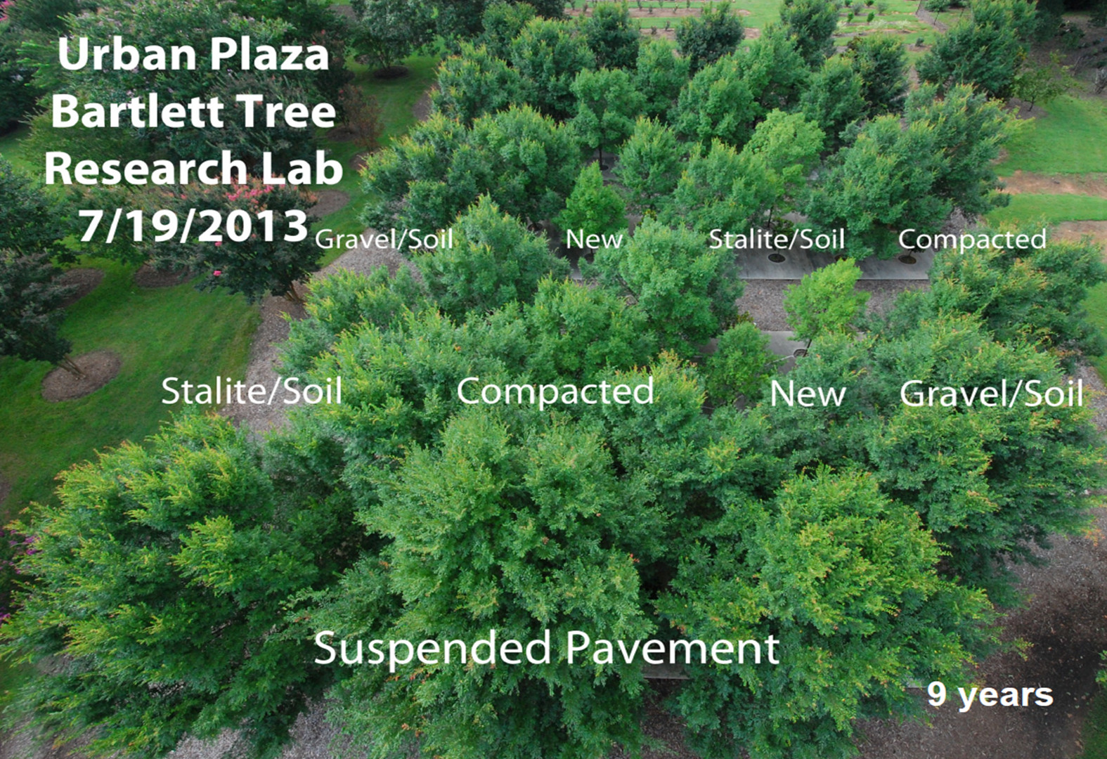 The Bartlett growing media in 2013, after nine growing seasons. Note the size of the trees growing in suspended pavement relative to other treatment types. Credit: E. Tom Smiley