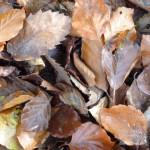 Effects of Pavement on Tree Soil Organic Matter