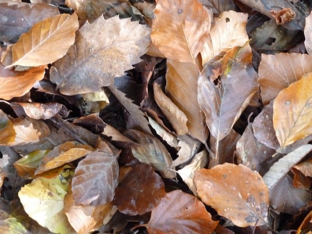 Effects Of Pavement On Tree Soil Organic Matter Deeproot