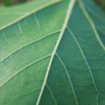 Minnesota's Evapotranspiration Credit System for Trees