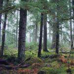Balance is Overrated <em><br><i>An Interview with World Forestry Center's Rick Zenn</em></br></i>