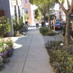 History of a Streetscape: The 20th Street Biophilic Landscape