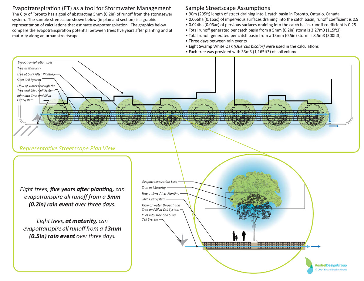 minnesota's evapotranspiration credit system for trees | deeproot blog