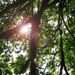 Is Average Tree Lifespan a Meaningful Number?