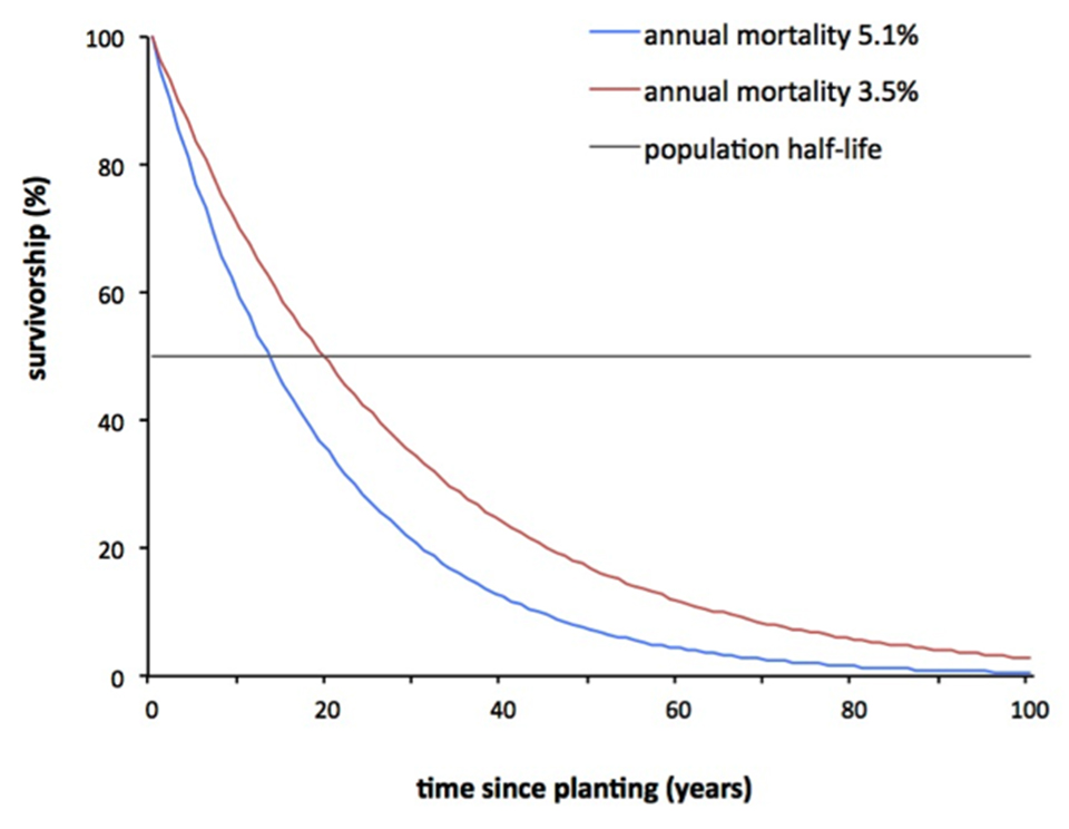 how to find survivorship rate