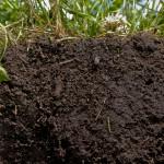 What Is Soil Organic Matter?