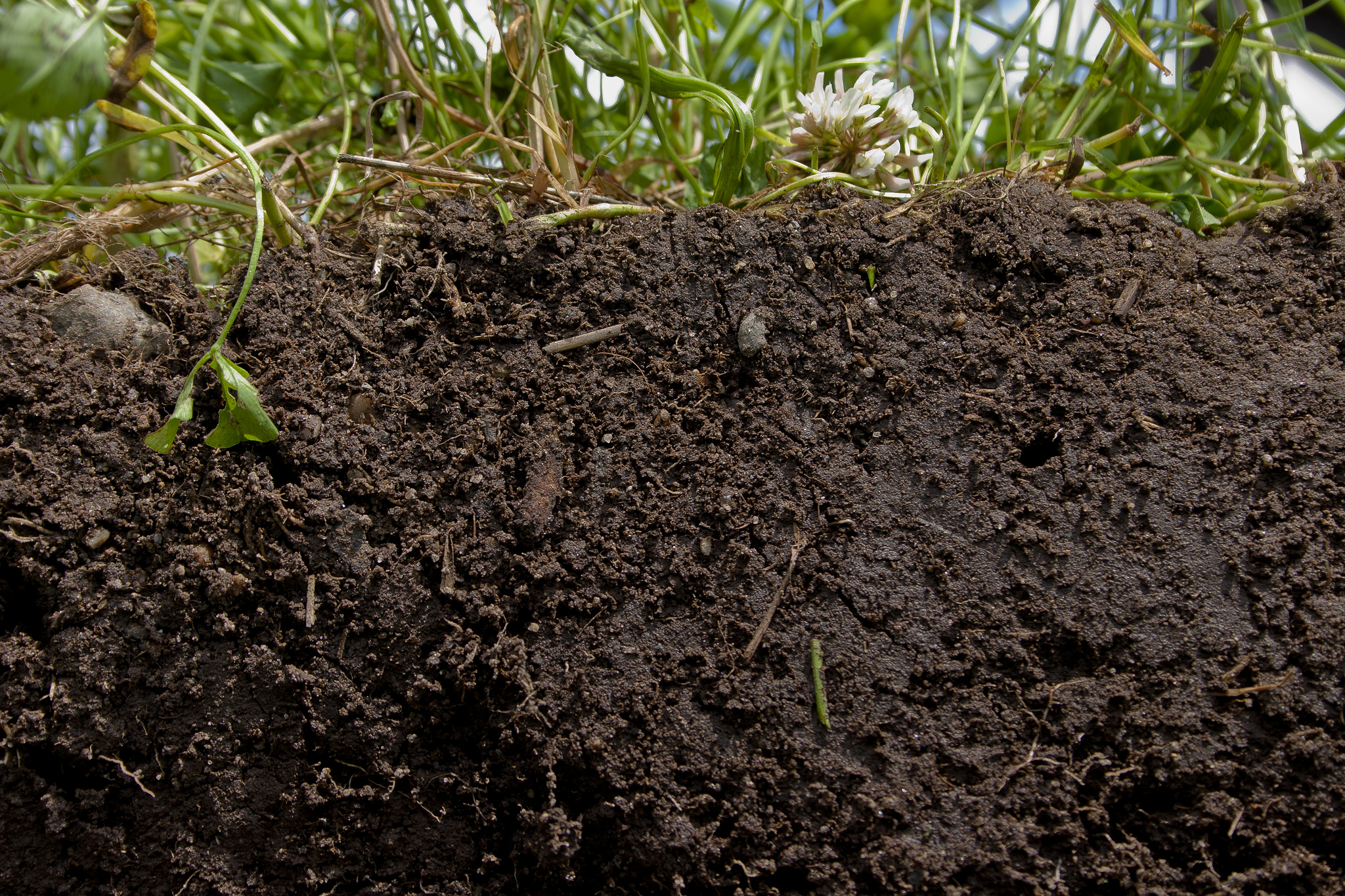 what is soil organic matter deeproot blog