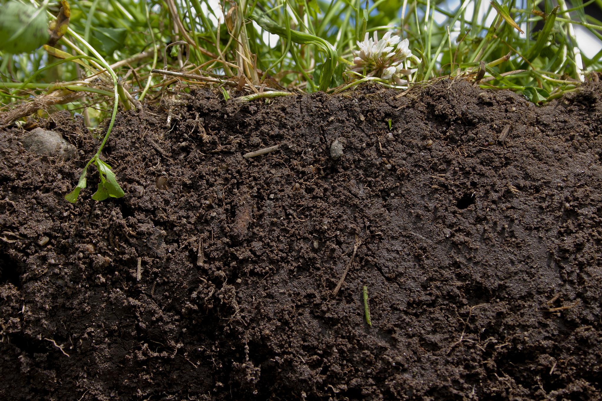 Ask jim urban deeproot blog - Nature s care organic garden soil ...