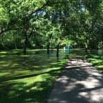 Trees That Can Tolerate Standing Water