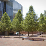 New Guideline Specifications for Nursery Tree Quality from the Urban Tree Foundation