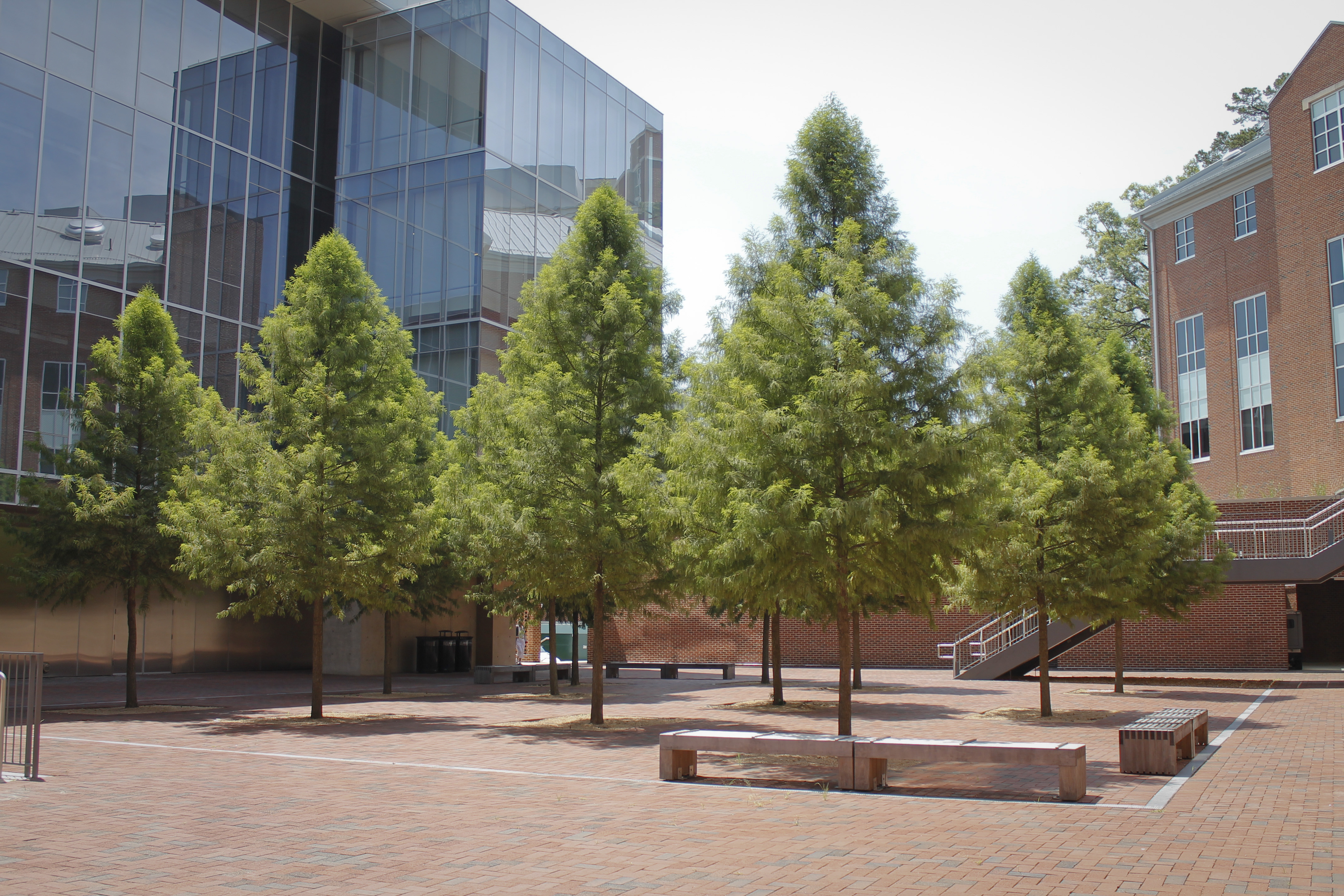 New Guideline Specifications For Nursery Tree Quality From The Urban Foundation