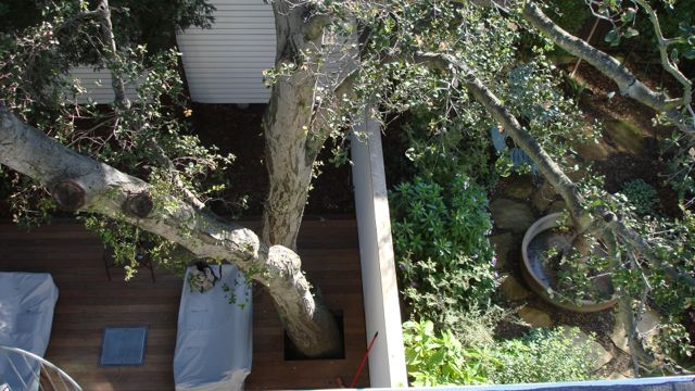 1 roots in neighbor's yard