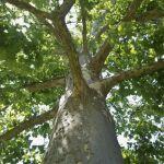 Tweet This! <em><br><i>Resources for Tree Professionals About Bird Safety</em></br></i>