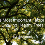 The Most Important Factor for Growing Healthy Trees