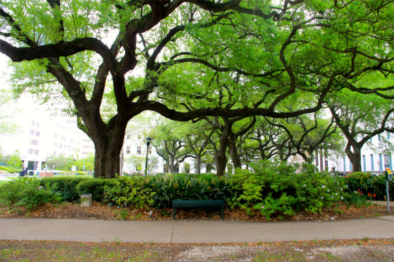 Tree on St. Charles Street in New Orleans, LA