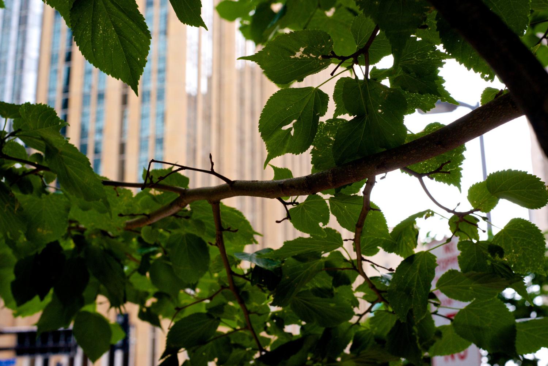 i-Tree Part 3: Minneapolis, MN case study