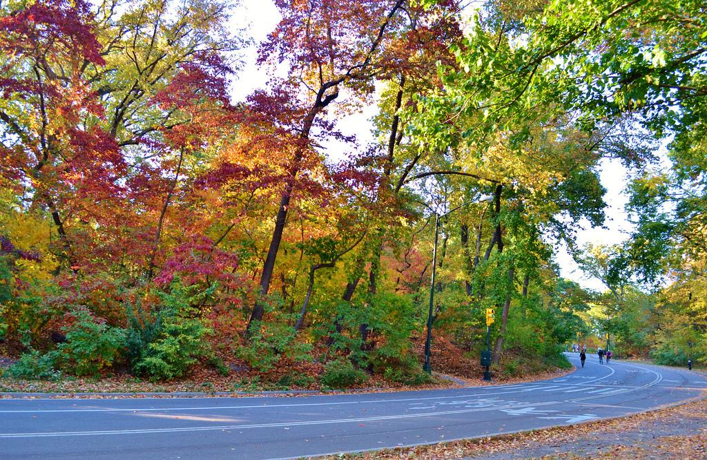01 - fall foliage_gigi_nyc - CC BY-NC-ND 2.0